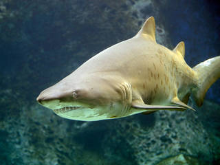 Greater Cleveland Aquarium © Greater Cleveland Aquarium