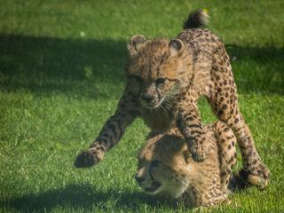 © Zoo Safaripark