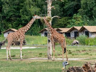 Serengeti-Park © Serengeti-Park