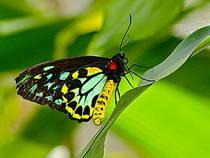 Schmetterling im Australian Butterfly Sanctuary, Kuranda. © Kyle Taylor, Dream It. Do It. World Tour