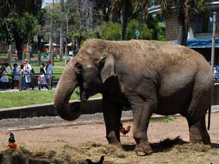 Zoo Villa Dolores  © Zoo Villa Dolores