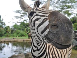 Taman Safari Bogor © CazzJj
