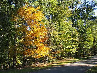 Herbst im Bernheim Arboretum. © bobstovall