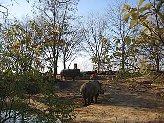 Nashörner im Toledo Zoo. © sdixclifford