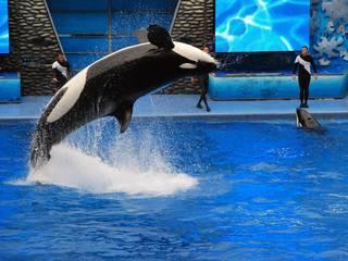 Rasante Attraktionen und beeindruckende Meeresbewohner erlebt man im Sea World Orlando