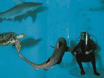 © Aquarium de Saint Malo