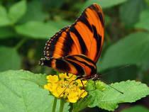Parkübersicht: Schmetterlingsgarten Sayn