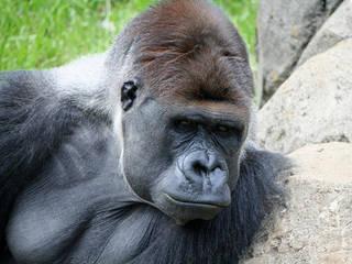 Chiba Zoological Park  © malfet_
