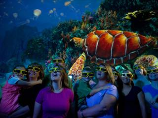 Turtle Trek © SeaWorld Orlando