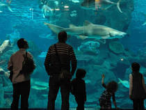 Blue Planet Aquarium © Joccay
